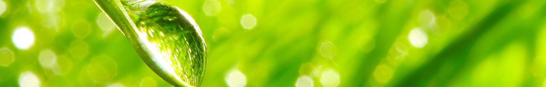 Brame's Green Cleaning Program